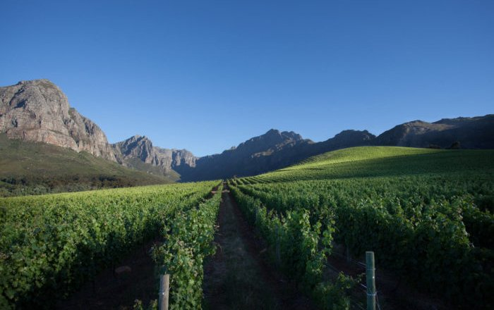 Why the 2015 Vintage Marks a Golden Age for South African Wine