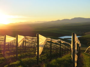 The view from the Pinot Noir vineyard on The Drift Farm