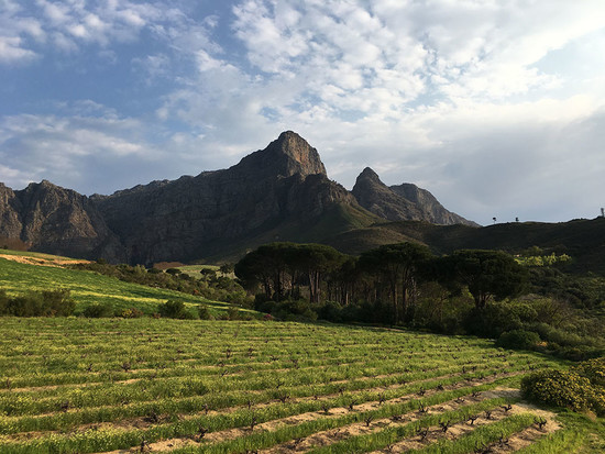 138422_south-african-vineyards-credit-julien-boulard