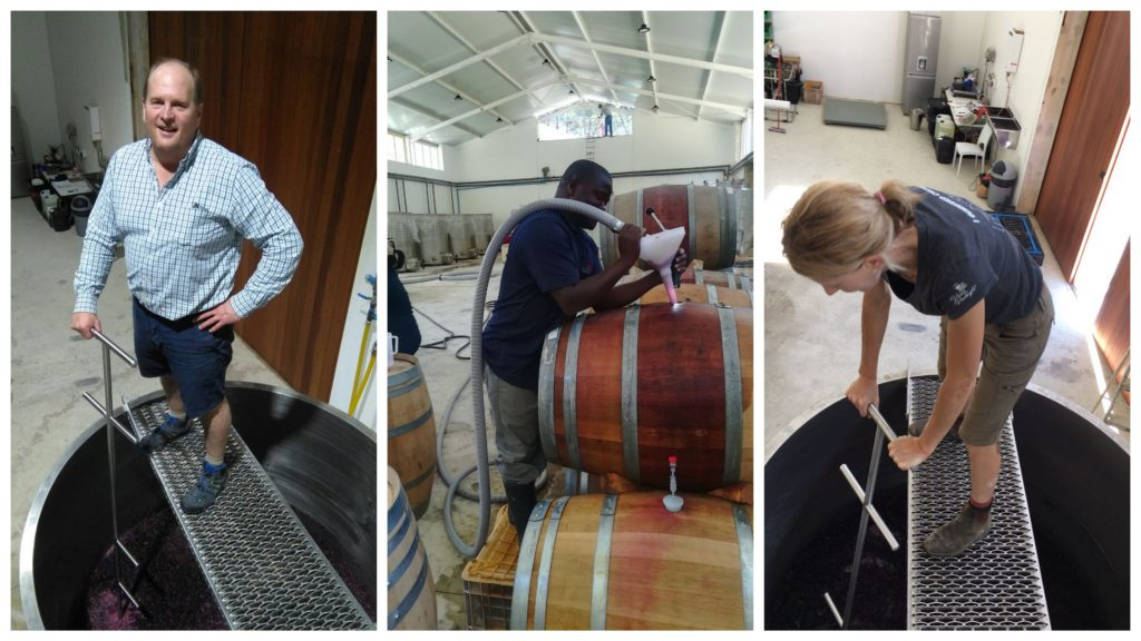 Working hard in the winery, punch downs and barrel top ups