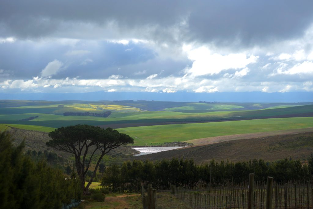 farm view north berg Shiraz winter 2014
